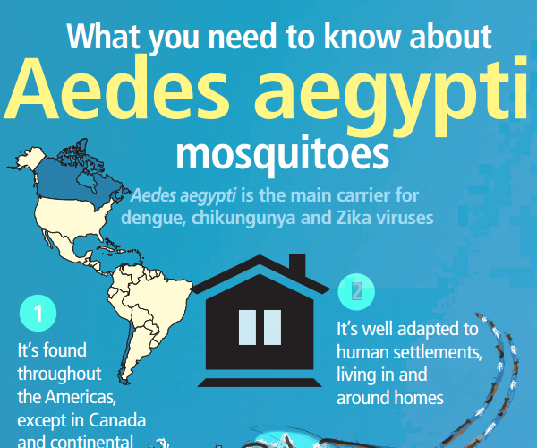 aedes-mosq_info