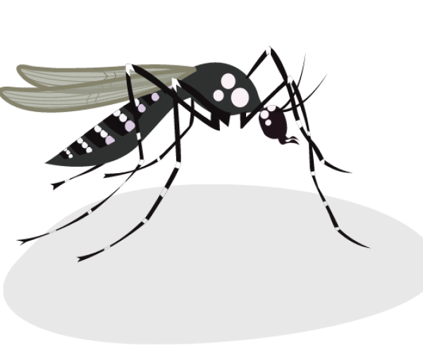 Communication Guide on the Zika virus