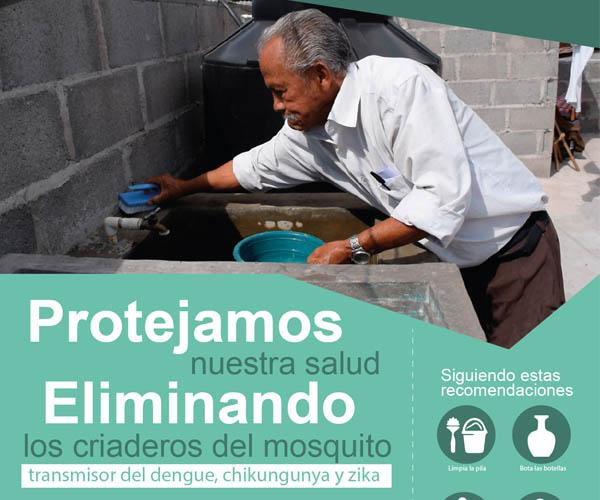 Protect your health by eliminating mosquito larvae